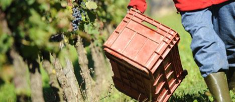 Job à l'étranger : tentez le secteur agricole !