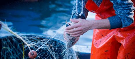 Les métiers de la mer recrutent